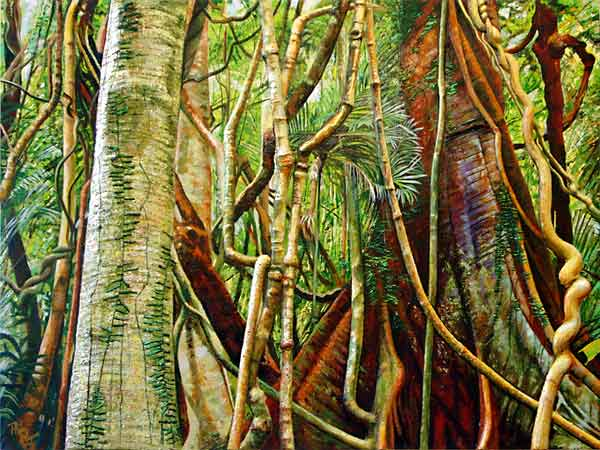 buttresses tropical rainforest